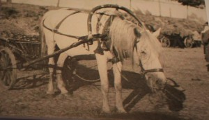 horse and wagon- journey